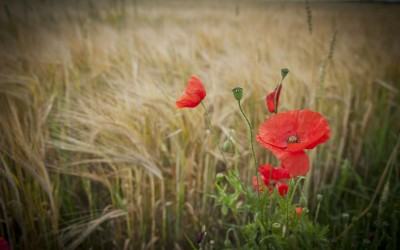 Remembrance: What will you do at work today?